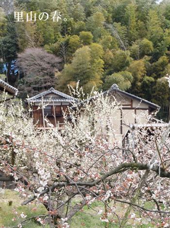 青谷梅林の春
