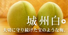 京都南部 特産品