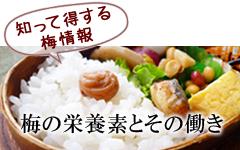 梅の栄養素